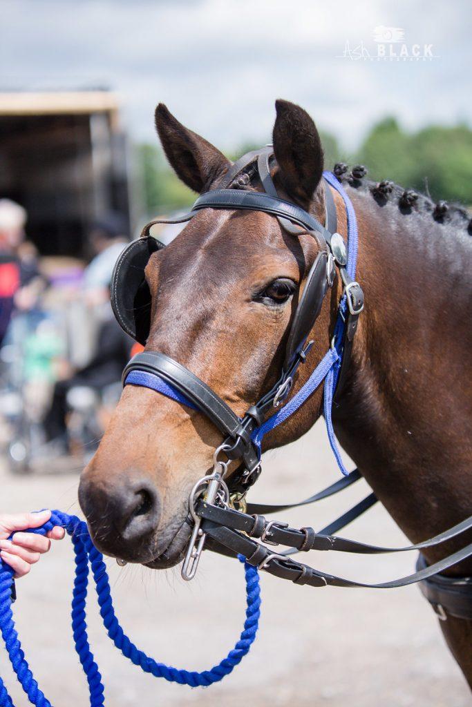 Our Pony Jim